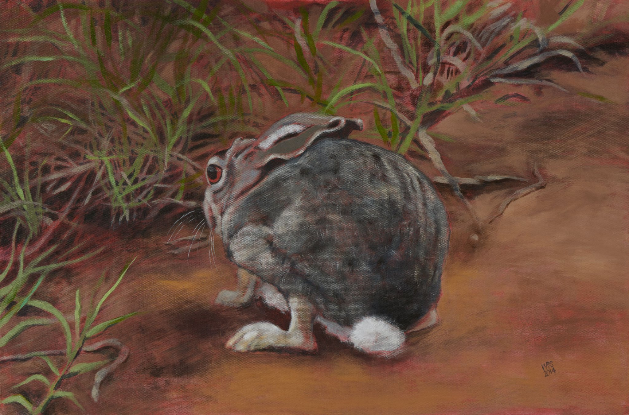 African scrub hare painting