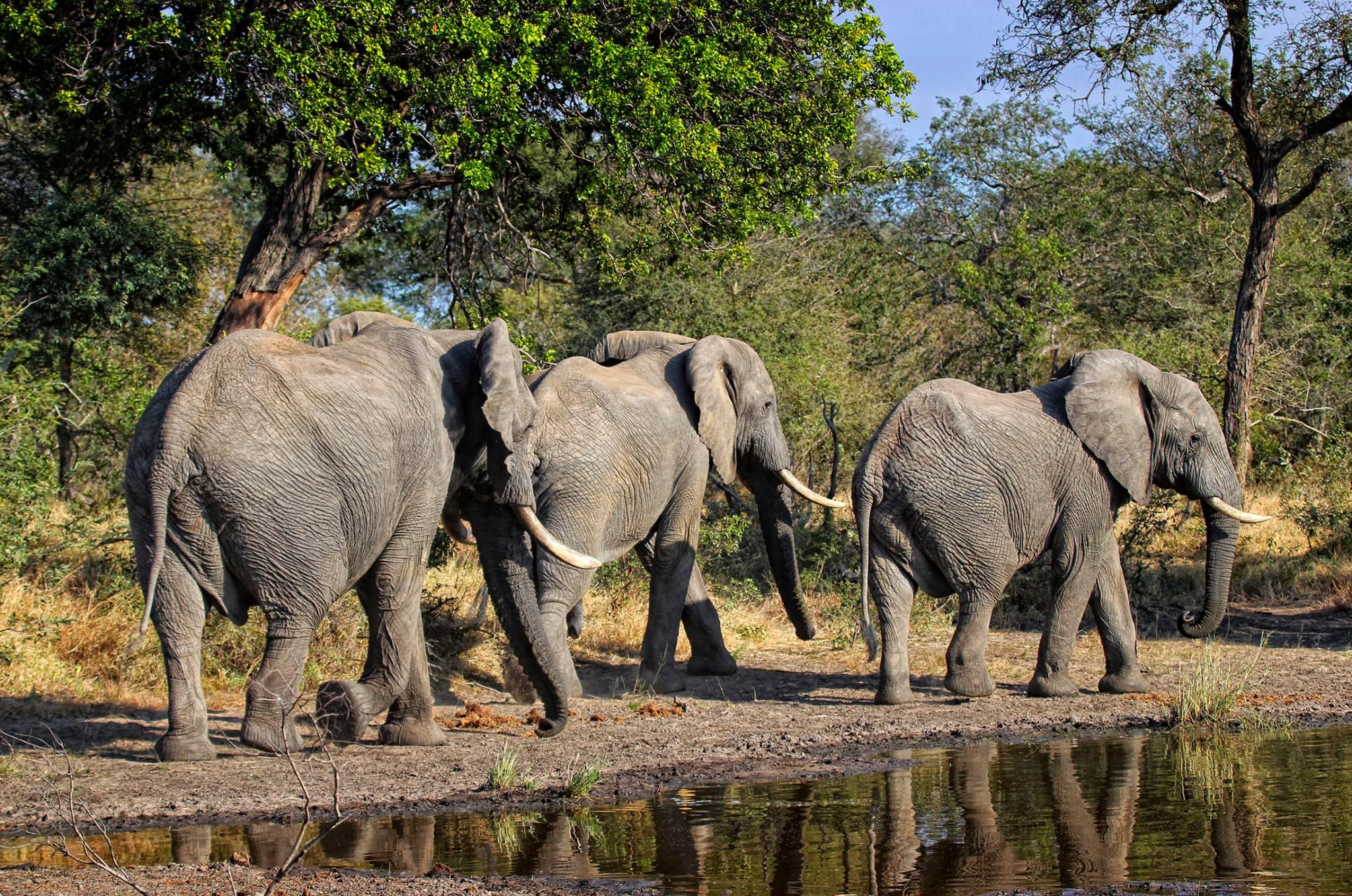 Photo of elephants walking